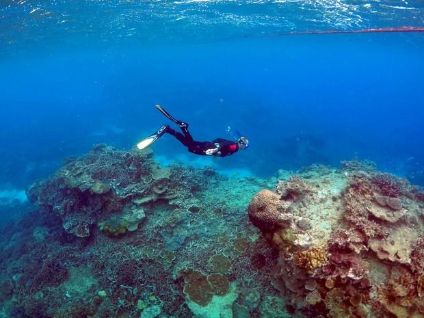 Mergulhador inspeciona corais na área conhecida como 'Coral Gardens', na ilha Lady Elliot, a 80 quilômetros de Queensland, na Austrália, em foto de 11 de junho de 2015 (Foto: Reuters/David Gray/Files)