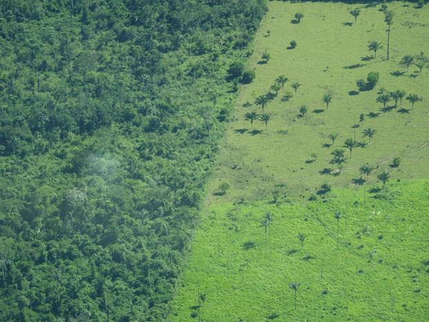 Imagem aérea mostra desmatamento na Amazônia. Perda da cobertura vegetal no bioma pode acarretar na extinção de diversas espécies de animais. (Foto: Divulgação/Toby Gardner/Science)