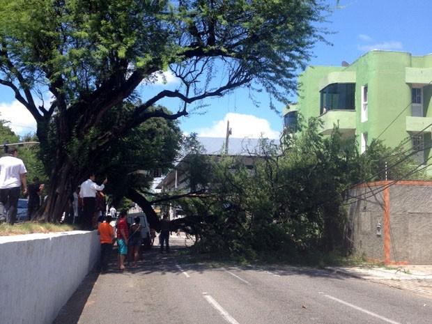 Uma árvore caiu na Avenida Hermes da Fonseca (Foto: Flavia Urbano)