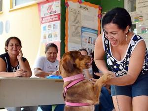 Donos devem levar animais com cartão de vacina, coleira e focinheira (Foto: Prefeitura de Boa Vista/Divulgação)