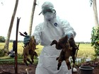 Agentes de saúde queimam patos com gripe aviária na Indonésia