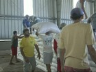 Criadores do Ceará voltam a receber milho do Governo Federal