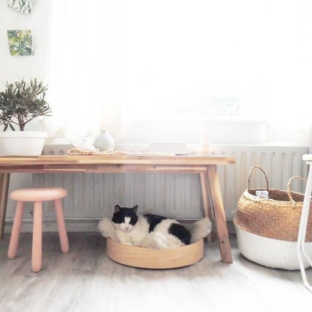 Charles, o gato de Jessica, é figura presente em seus posts no Instagram (Foto: Reprodução/Instagram)