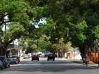Plano vai proibir plantio de algumas espécies de árvores em Macapá