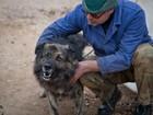 Croata pode levar multa de R$ 8,8 mil se cão não parar de latir à noite