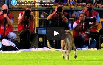 Bicho pegou! Lista traz dez invasões 'animais' nos campos de futebol