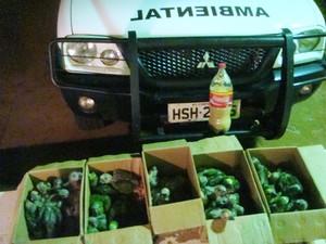 PMA flagra tráfico de 46 filhoes de papagaio (Foto: Divulgação/PMA)