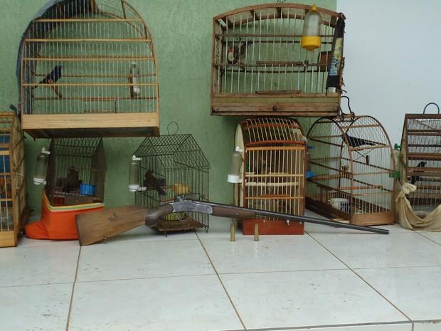 Polícia suspeita que pássaros eram caçados e depois vendidos (Foto: Divulgação/Força Verde)