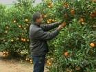 Censo sobre pomares de laranja é realizado na região de Itapetininga