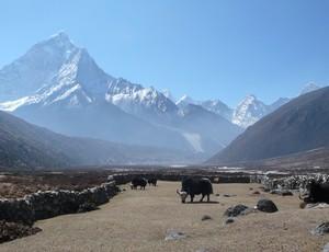 Maximo Kausch tira foto de Yaks pastando em Pheriche, Nepal (Foto: Foto: Arquivo pessoal)