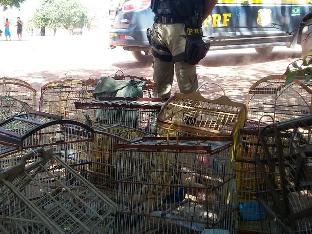 Mais de 600 animais foram apreendidos nos primeiros sete dias de operação (Foto: Divulgação/Polícia Rodoviária Federal)