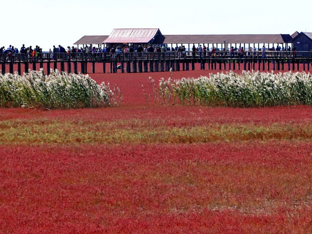 A praia de Panjin (Foto: AFP)