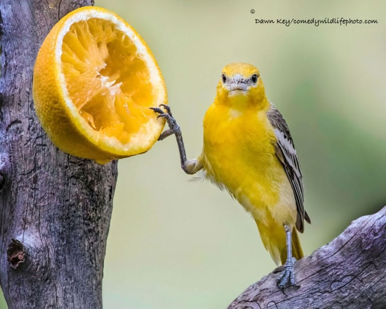 (Foto: Comedy Wildlife Photo (Reprodução)