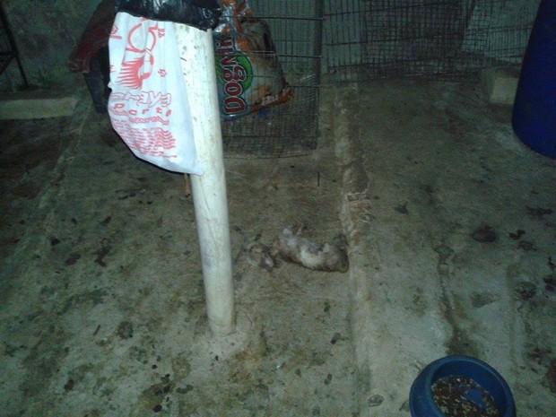 Em Nova Friburgo, este filhote foi encontrado morto (Foto: Monique Malhard)