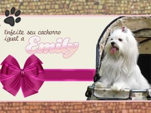 Deixe seu cachorro igual a Emily! (Foto: Salve Jorge/TV Globo)