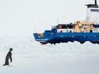 Cientistas alertam que turismo é uma ameaça para a Antártica