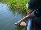 Ibama realiza operação para preservar reprodução de tartarugas