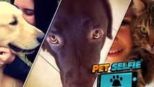 Conheça a página especial na internet sobre 'Mundo Pet' (Reprodução/TV TEM)
