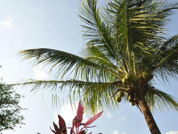 Céu limpo na tarde desta quarta-feira (16) em Campo Grande (Foto: Isabela Cavalcante/ G1 MS)