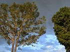 Tempo será abafado em Rondônia nesta quinta-feira, 21, diz Sipam