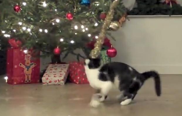 Vídeo compila trapalhadas de gatos na época do Natal (Foto: Reprodução/YouTube/Sho Ko)