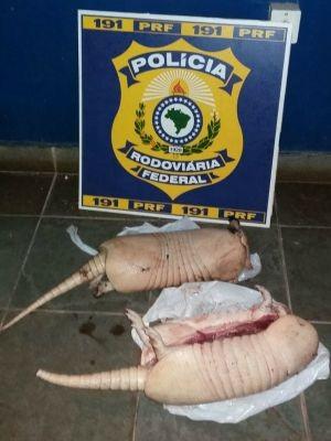 Polícia Rodoviária Federal encontrou no carro dos suspeitos dois tatus abatidos, em Porto Velho (Foto: PRF/Divulgação)