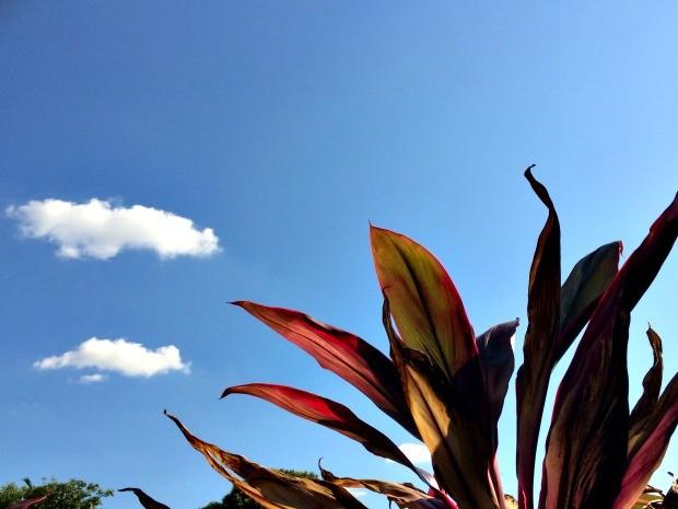 Céu azul com algumas nuvens nesta tarde em Campo Grande (Foto: Isabela Cavalcante/G1 MS)