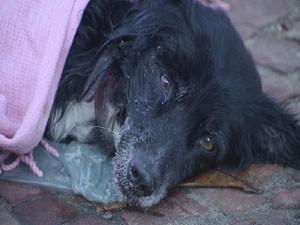 Cão acidentado em Santos, SP (Foto: Reprodução/TV Tribuna)