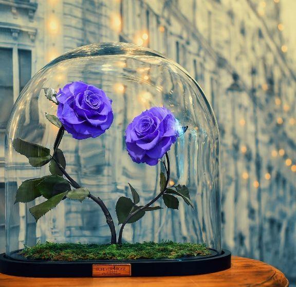 Rosas de todas as cores  (Foto: Reprodução/Instagram)