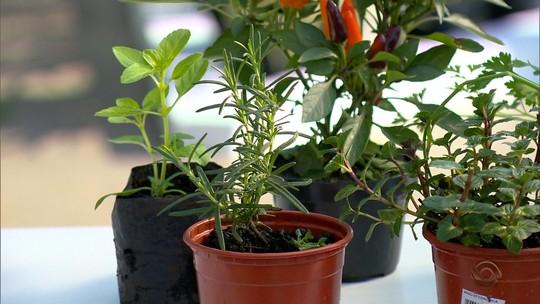 Aprenda a montar hortas em espaços pequenos dentro de casa