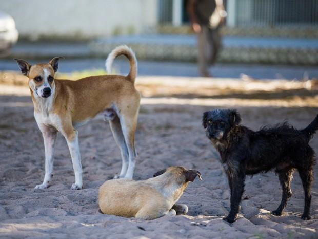 Cães se reproduzem rapidamente e sem cstração é impossível ter o controle populacinal. (Foto: Jonathan Lins/G1)