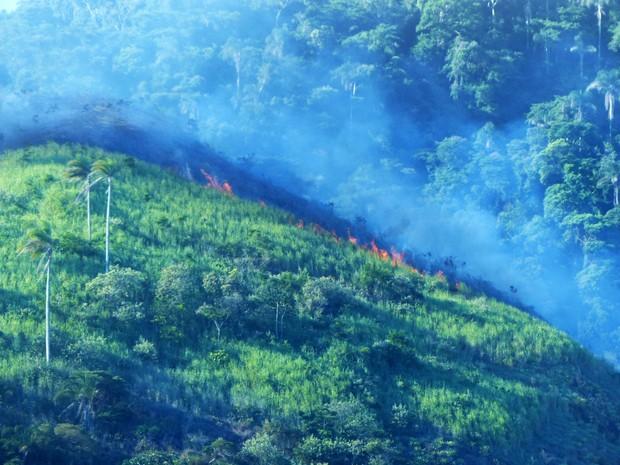 Incêndio atinge mata na Barra da Tijuca, Zona Oeste do Rio (Foto: G1)
