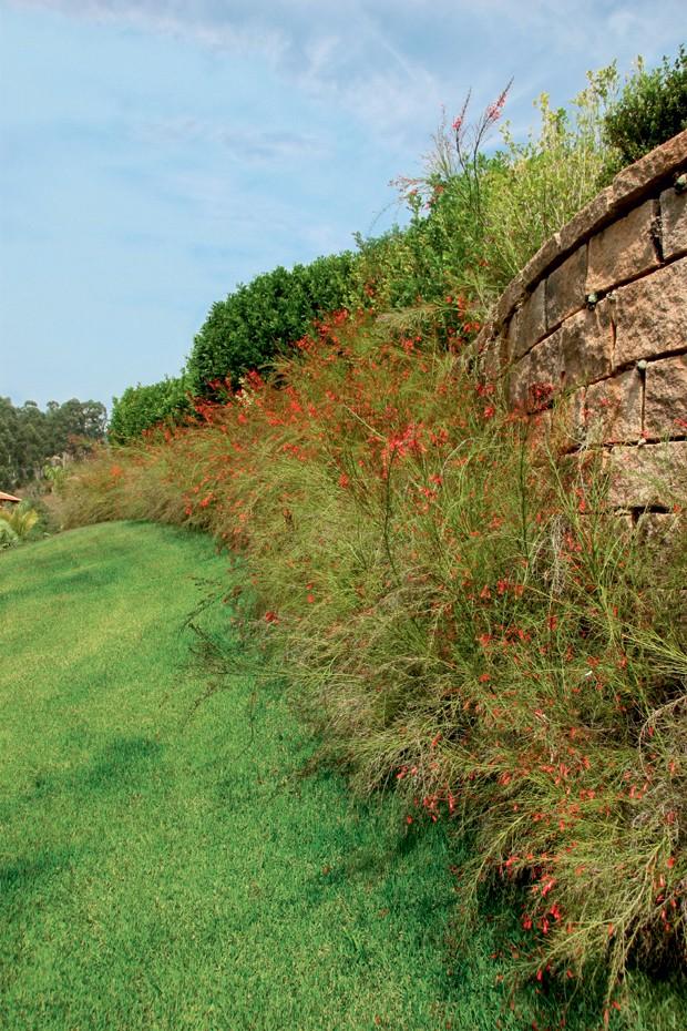 russelia-selecao-natural (Foto: Casa e Jardim)