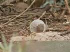 Prefeitura de Bauru começa mutirão em bairros para combater a dengue