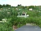 Mato alto em cemitério incomoda visitantes em Barra Mansa, RJ