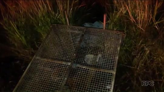Onça-parda que se escondeu embaixo de carro é solta em área de mata no norte do Paraná