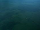 Expedição fará registro inédito de corais descobertos no AP há um ano