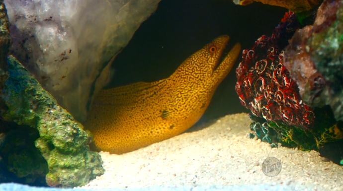 Em um dos aquários do Marcelo Bosso tem até o peixe Moreia (Foto: reprodução EPTV)
