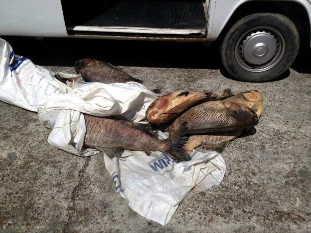 O pescado estava sendo comercializado em seis bancas (Foto: Ana Graziela Maia/Rádio Amazonas FM/Reprodução)