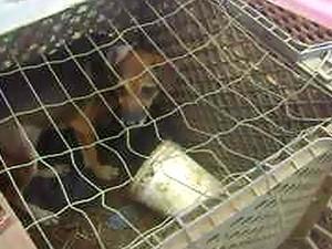 Cachorros ficavam nessas caixas (Foto: Marcelo Oliveira)