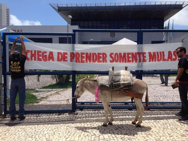 Agentes da PF usaram uma mula em protesto na manhã desta terça em Natal (Foto: Cedida/Sinpef-RN)