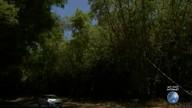 CCR é multada por desmatamento do bambuzal no Aeroporto de Salvador