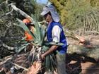 Bromélia-gigante resgatada é replantada em Barra do Ribeiro, RS