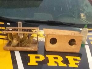 Pássaros foram apreendidos durante operação (Foto: Divulgação/PRF)
