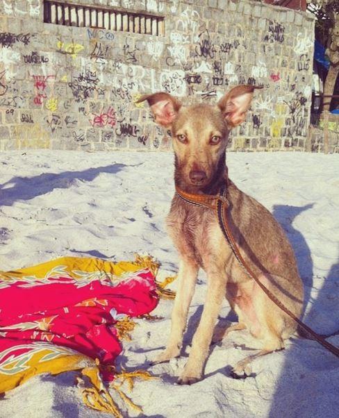Cachorro de Petra Mattar (Foto: Instagram / Reprodução)