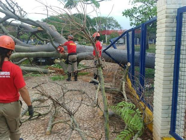 Bombeiros fazendo a retirada de árvore em Campo Grande (Foto: Graziela Rezende/G1 MS)