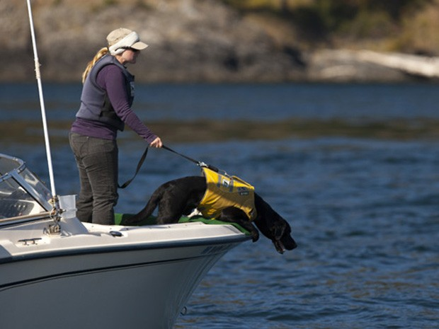 A treinadora Elizabeth Seely segura cão Tucker enquanto ele localiza rastro de baleia orca no litoral (Foto: Matthew Ryan Williams/The New York Times)
