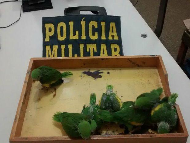 Pássaros foram apreendidos em casa (Foto: Polícia Militar/ Rondonópolis-MT)