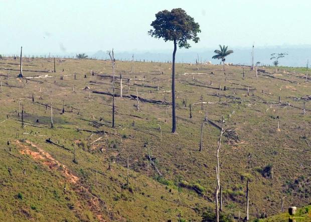 Desmatamento na Floresta Amazônica (Foto: Antônio Cruz/ABr)