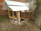 Vizinhos constroem casa para cadela e 8 filhotes após abandono, no AP